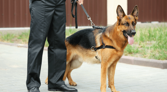 k9-protection-page-benefit-1-protected
